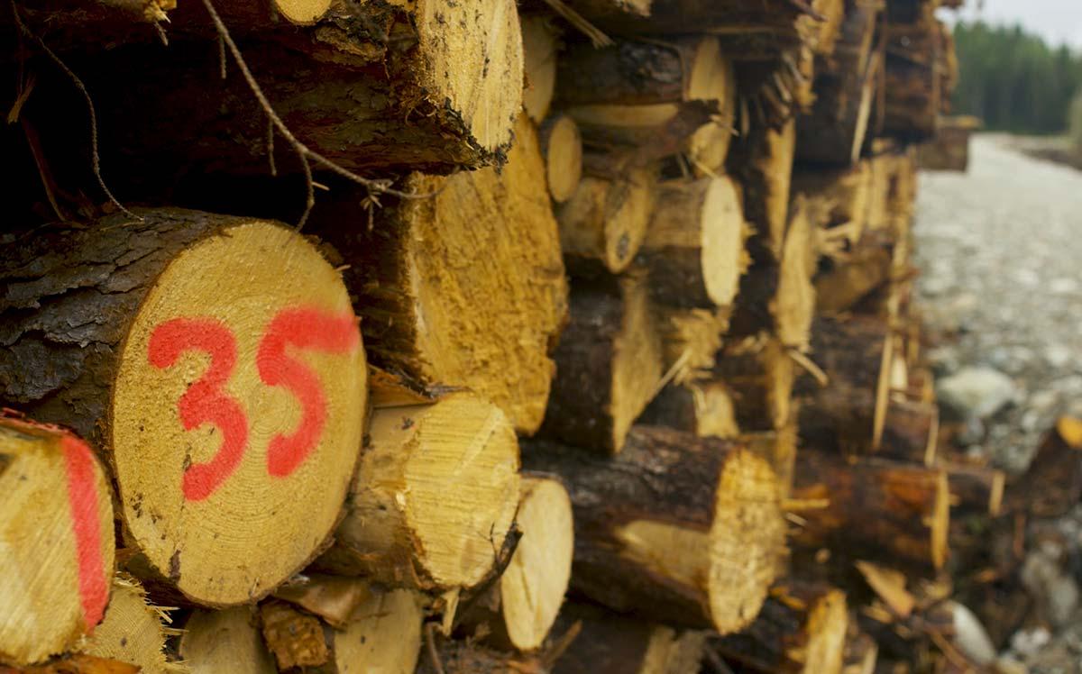 Arbre coupe forestière - Fourrure Abitibi360
