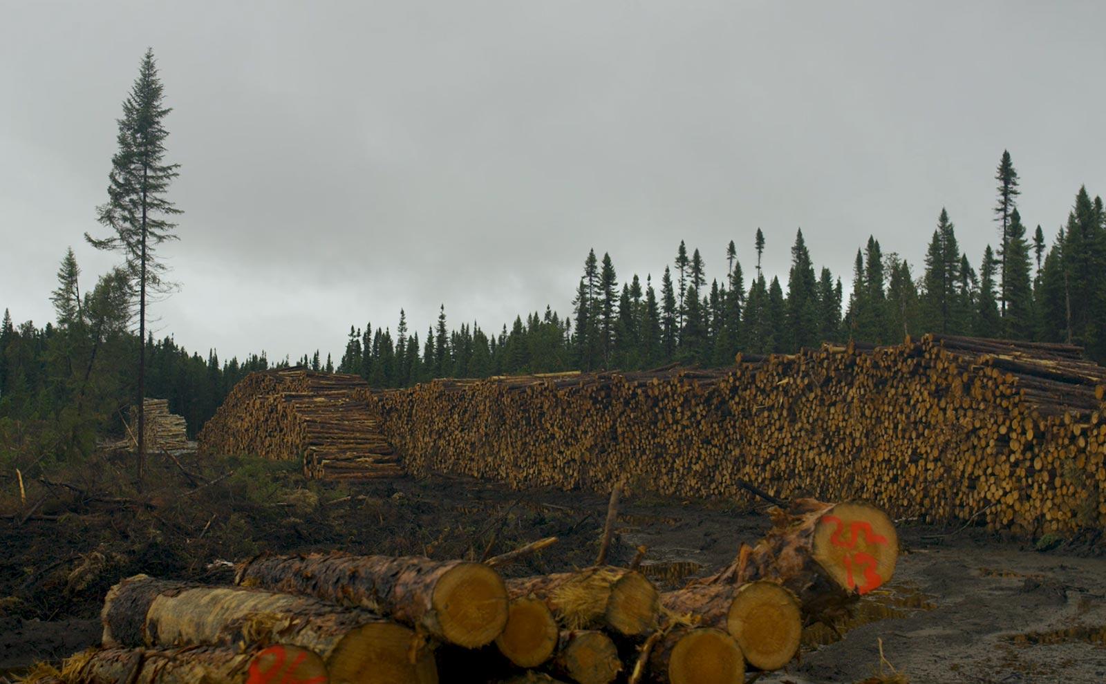 Coupes forestières - Fourrure Abitibi360